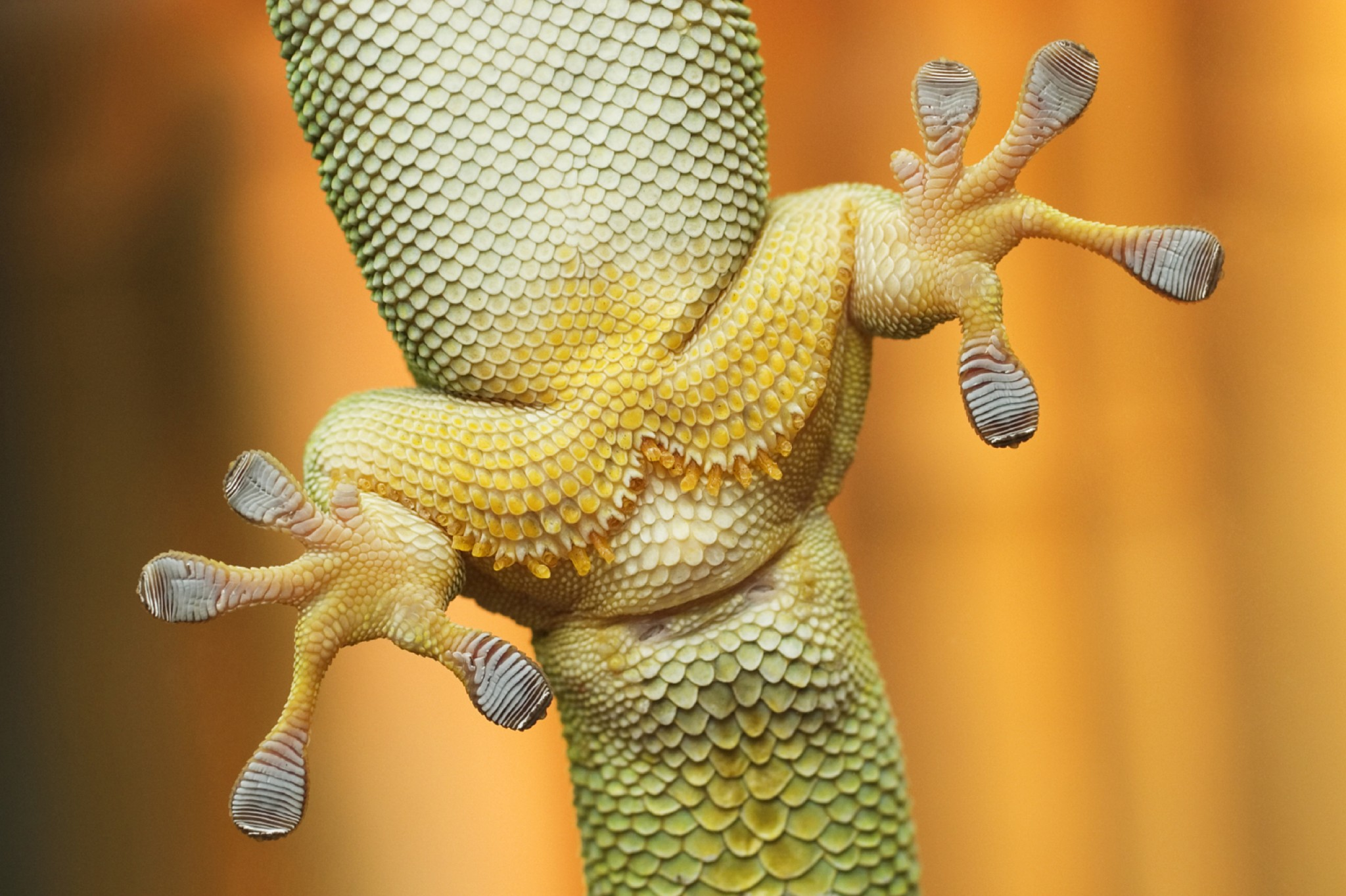 nanoscale adhesive inspired by the gecko essay The future of nanotechnology design and teachnology | see more ideas about architecture, environment and evolution.